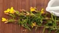زيت زهرة الربيع لعلاج الاكزيما