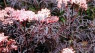 أربعة أعشاب تقوي المناعة وتحارب الفيروسات